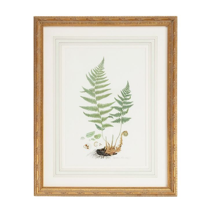 """This lovely wall wart features a green fern lithograph print. The wall art features a gold frame with a French mat. It measures 22""""W X 27.5""""H. Check out the coordinating prints. Please note this artwo"""