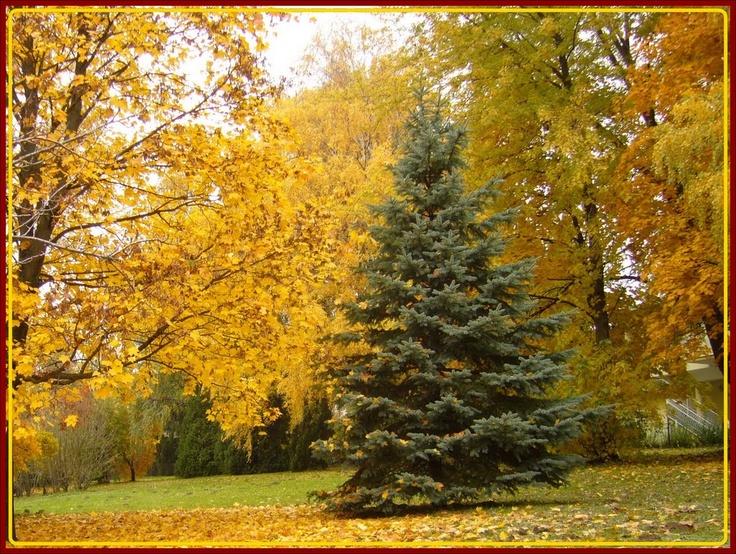 Zalakaros ősszel, Hungary, by panoramio user Magdi51