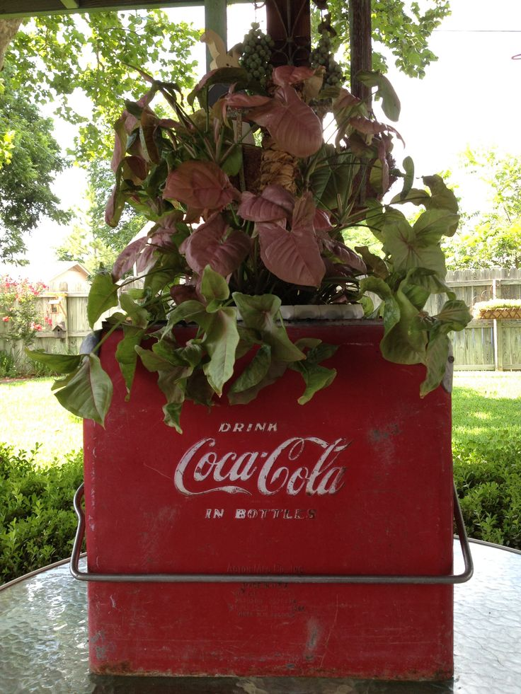 Vintage Coca Cola Ice Chest & Nephthytis Plant