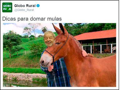 Diário de um Gaúcho Grosso: Dicas para domar mulas