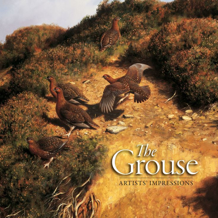 The Grouse by Simon Gudgeon, Ashley Boon, Ben Hoskyns, Terence Lambert, Rodger McPhail, Derek Robertson, Jonathan Sainsbury, Keith Sykes, Owen Williams | Quiller Publishing. Words are insufficient to describe the excitement of a covey of grouse flying towards the butt, but the artist can portray that moment that raises the heartbeat of the sportsman and creates an empathy between them. #grouse #art #sport