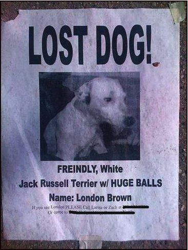 56 best Lost and found images on Pinterest Beautiful, Children - lost pet poster