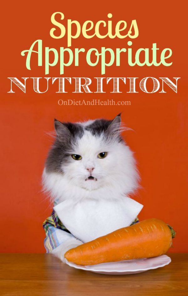 Species Appropriate Nutrition Cat Nutrition Nutrition Recipes Nutrition
