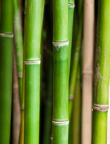 Bamboo - Garden design: 12 shade loving plants balcony