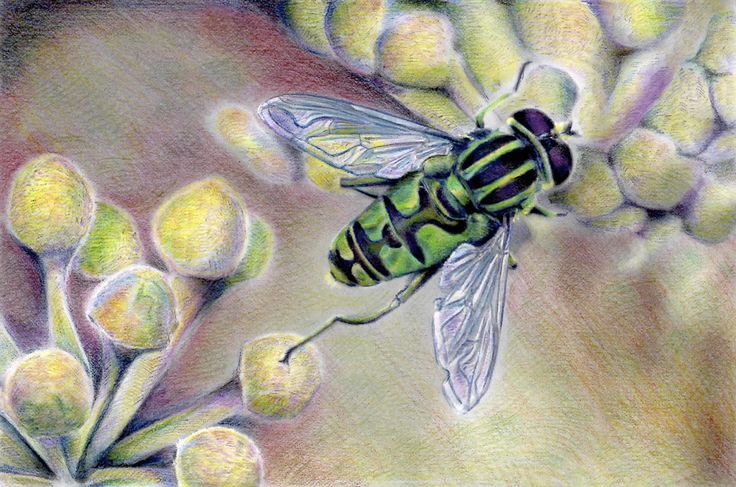 View the different ways people have colored the bee from the Beautiful Creatures adult coloring book.