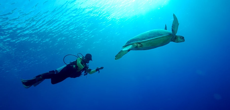 Derawan is a 1.2 million-hectare marine conservation area, within which 5 out of 6 known species of turtle in the world live peacefully. Photos taken by Cipto - http://www.indonesia.travel