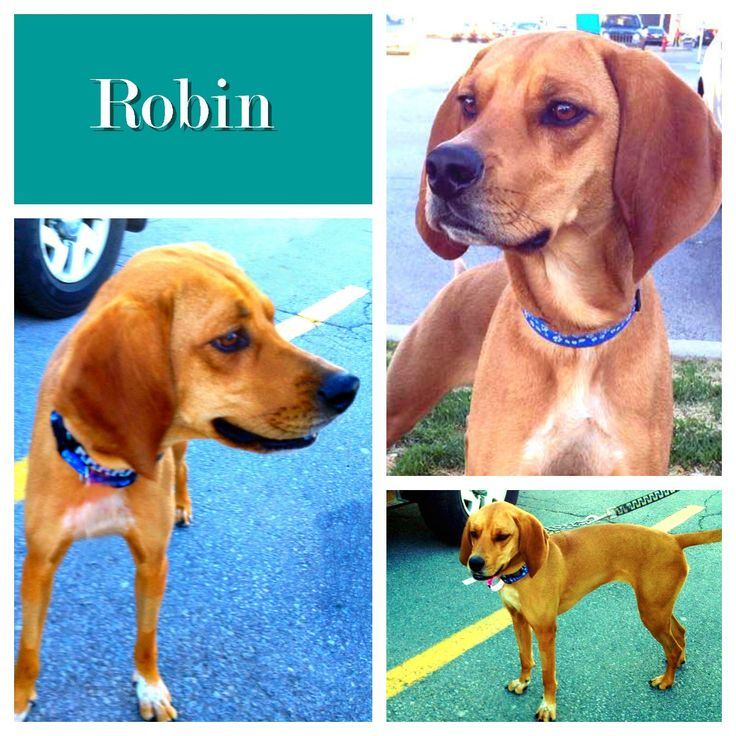 Fostered -Apr 2015 /Adopted -Apr-2015