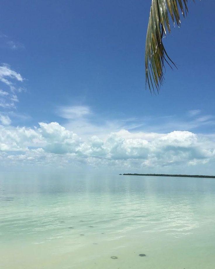 Hunabku view outside of Luis Echeverria Alvarez town 32 min. to Chetumal Quintana Roo Mexico By Juan Pablo Lopez Perez - #neverstopexplore #nature #nofilter #paradise #heaven #blue #clouds #blue #palmtree #thatview #oceanview #loveit #beauty #vivamexico #proud #quiet #relax #colors #caribbean #visitmexico #quintanaroo #googlephotos #qoolplaces #goals2017 #bucketlist #beachvibes #bestplaces2017