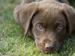 Labrador Names: Hundreds of Great Ideas to Help You Name Your Dog