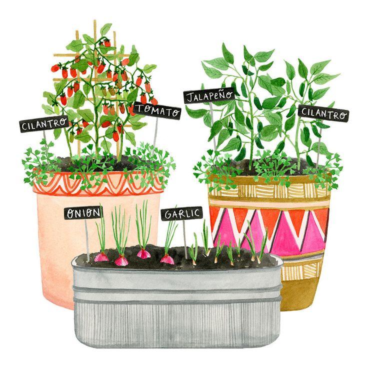 A Grow-Your-Own-Salsa Container Garden Plan