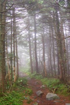 The Long Trail in Vermont is the oldest long-distance trail and traverses many of the Green Mountain's summits.