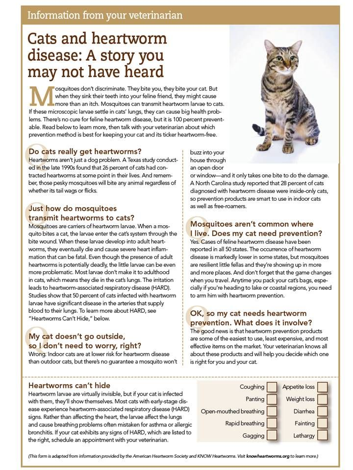April is Heartworm Awareness Month. Learn about Cats and