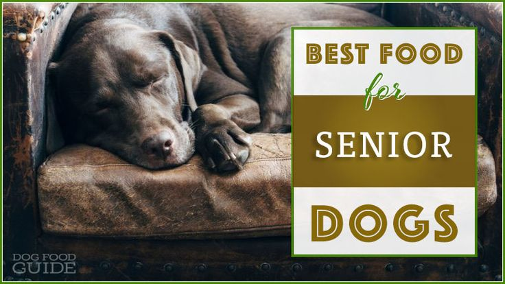 6 Best Healthy Dog Food Brands for Senior Dogs