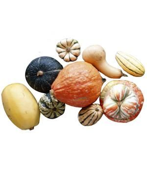 Learn how to identify and prepare  winter squash varieties.