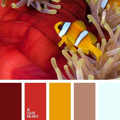 amarillo anaranjado, burdeos, burdeos y rojo, color blanco sucio, color naranja, colores de la anémona de mar, colores del pez payaso, colores vivos, combinación de colores, de zanahoria, elección del color, escarlata, marrón, marrón pastel, rojo, selección de colores.