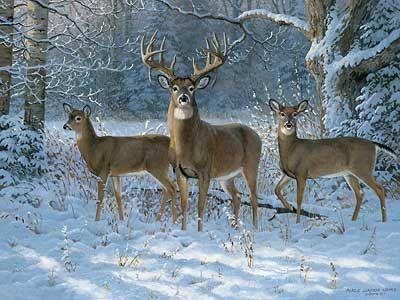 Winter Trio Whitetail Deer By Persis Clayton Weirs Wild