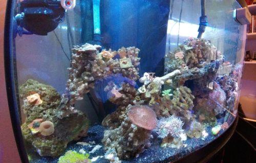 90 Gallons Fish Tanks