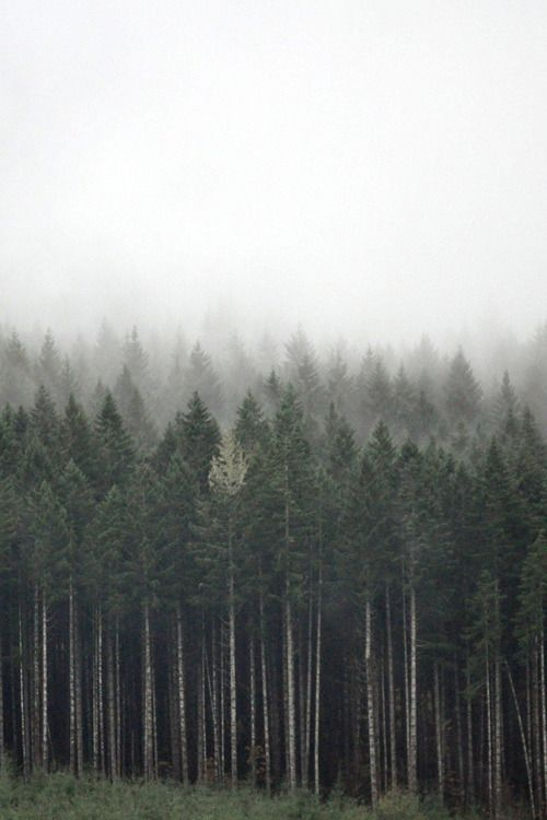 """""""Forest for the Trees"""". Тайга (?). © russell.tomlin (http://www.flickr.com/photos/29910712@N05/) (?). #Tree #Trees"""