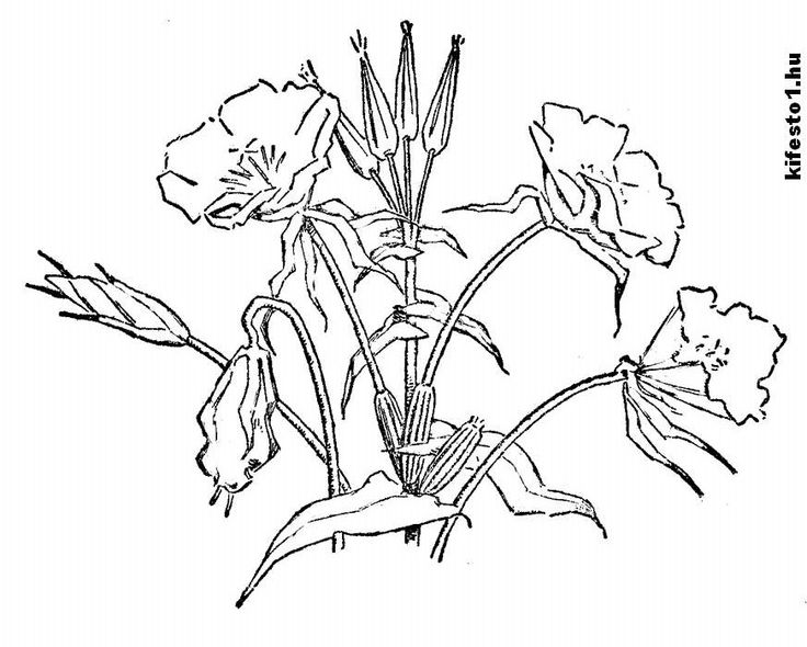 Jungle Flower Coloring Pages