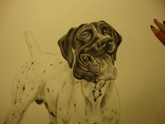 Custom Pencil & Charcoal Pet Drawings by KentuckyWildThings