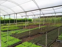 Greenhouse Horticulture Market 2018 Global Research By Applications, Types (Glass Greenhouse, Plastic Greenhouse) Demand, Cost Analysis,…
