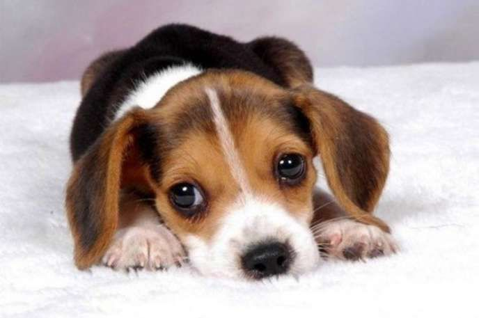 10 Things You'll Be Surprised to Find Out Your Dog Hates - Answers.com