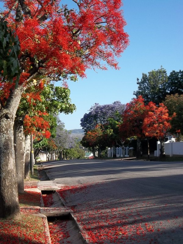 Colourful Oatlands Road in Grahamstown
