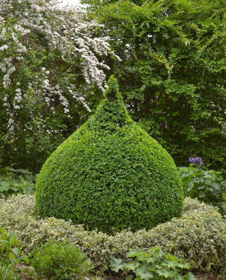 1000 ideen zu buchsbaum auf pinterest hecken minimalistischer garten und moderne g rten. Black Bedroom Furniture Sets. Home Design Ideas