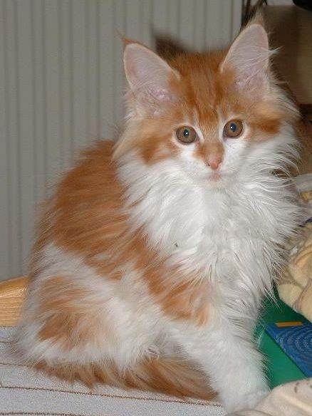 wikiHow to Help Cats Become Friends -- via wikiHow.com