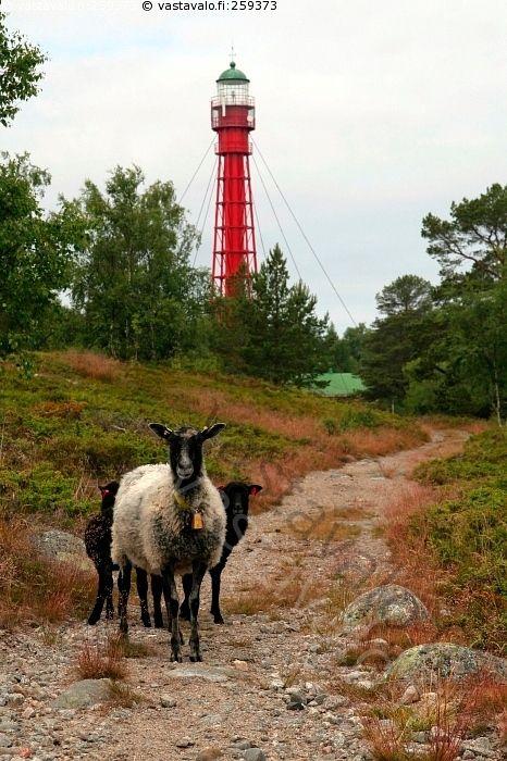 Majakanvartijat - Valassaaret Valassaari majakka merenkulku lammas lampaat karitsa korvamerkki polku Merenkurkku arka emo