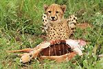 Safari lodges in KZN   Hluhluwe Game Reserve   Private Game Lodge
