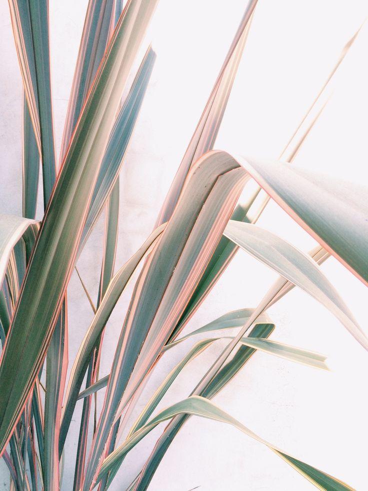 Planten & Bloemen | ELLE Decoration