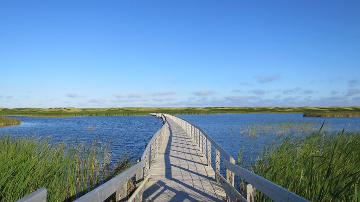 Floating boardwalk, Bowley Pond, Greenwich Dunes Trail, Greenwich, Prince Edward Island National Park, Prince Edward Island, Canada
