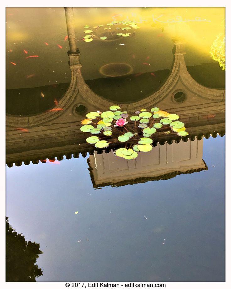 Awaken the light #Alcazar, #Camus, #Fountain, #Light, #Quote, #Reflection, #Seville, #Spain, #Travel - https://goo.gl/dLmZ9S
