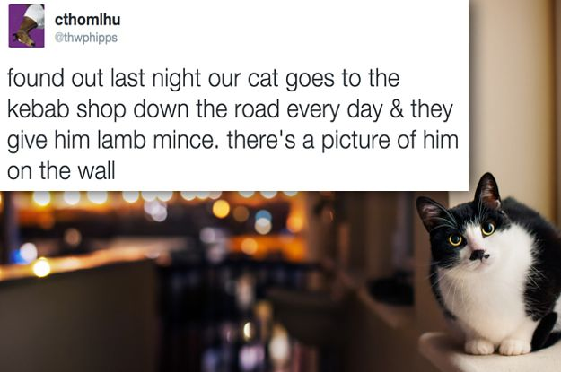 25 More Tweets About Animals That Will Make You Laugh Every Time
