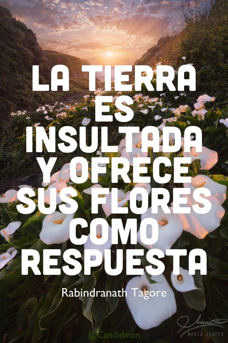 """""""La #Tierra es insultada y ofrece sus #Flores como respuesta"""". #RabindranathTagore #FrasesCelebres @candidman"""