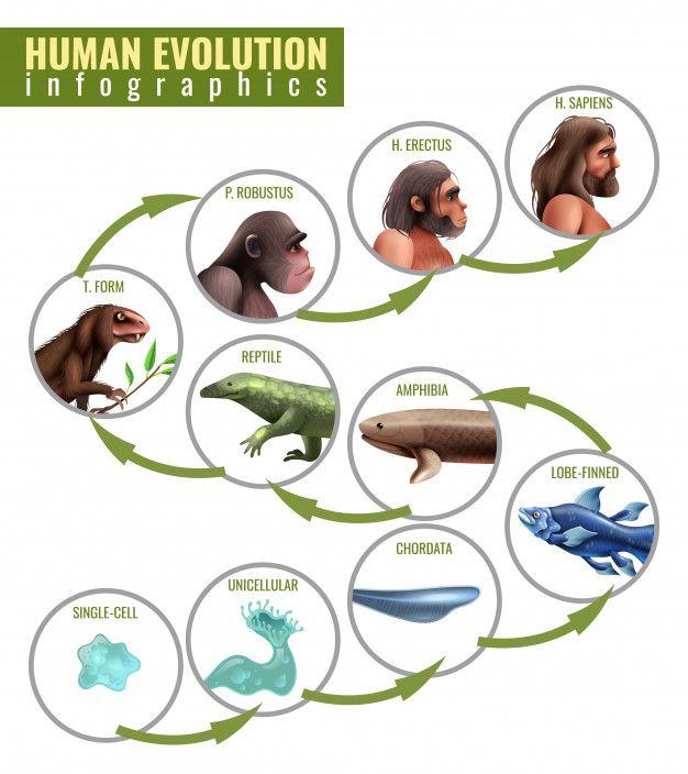 Pin On Darwin S Theory Of Evolution