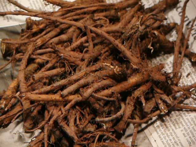 http://cloverleaffarm.hubpages.com/hub/Health-Benefits-of-Dandelion-Root