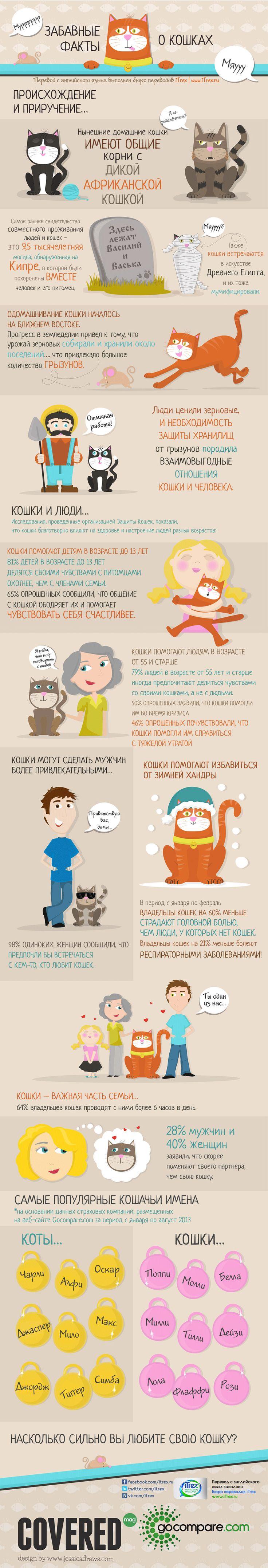 Забавные факты о кошках