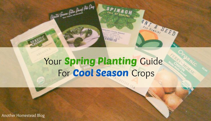 Get out the compost and make those raised beds, because spring is almost here.   I'm starting my tomato and squash seedlings indoors, and even starting some crops outside (potatoes, anyo…