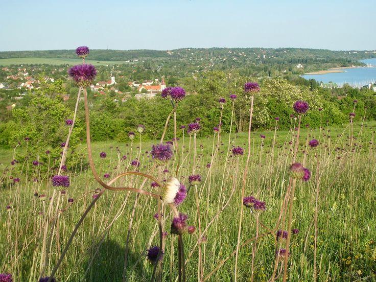 Lombház: Balaton-part