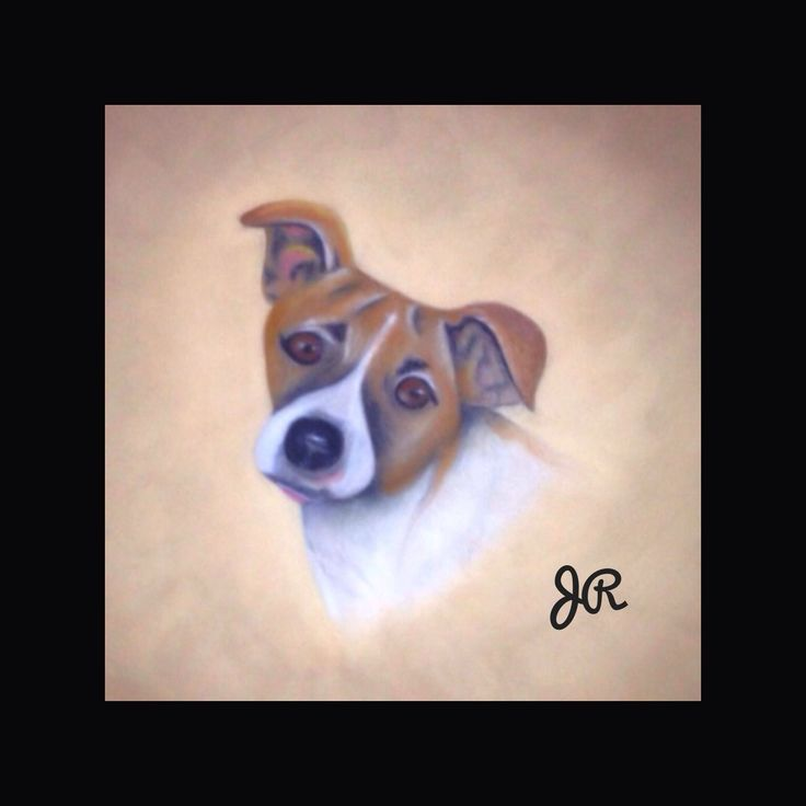 Pastel drawing I did of my dog scrappy.