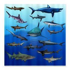 Shark Gathering Shower Curtain $59.50