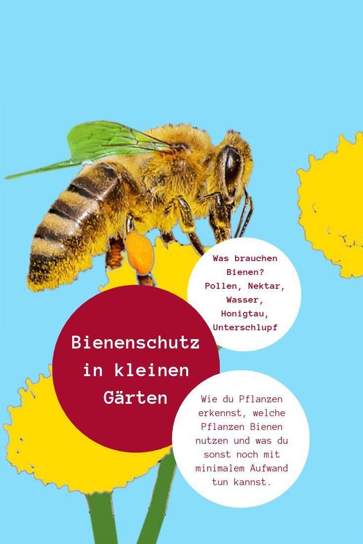 Bienenschutz Im Kleinen Garten Am Einfachsten Hilft Du Insekten Wenn Du Ihre Bedurfnisse Kennst Und Wei T Wie Du In 2020 Kleiner Garten Bienen Pflanzen Erkennen