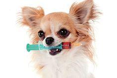 Golpe duro contra a leishmaniose canina