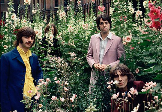 Beatles Bushes