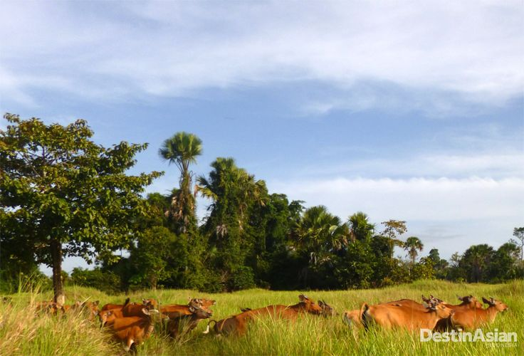 Rawa Aopa Watumohai berperan penting dalam ekologi Indonesia. Sapi-sapi  juga memanfaatkan taman nasional Rawa Aopa untuk mencari makan.