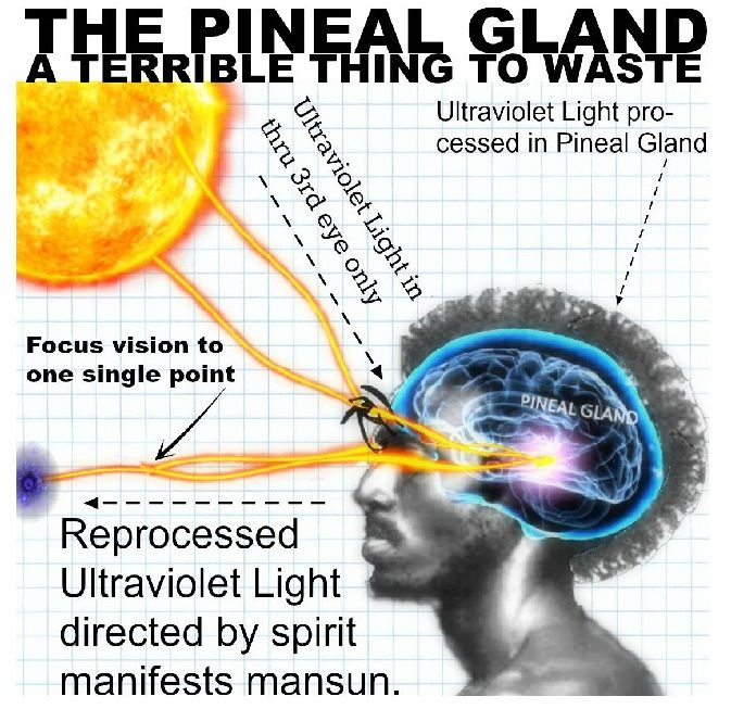 """""""Melanin Pigments in Human Pineal Gland,"""" Journal of the Anatomical Society of India Masson-Fontana staining confirmed the presence of melanin pigments in the human adult pineal gland. In 1-10 year..."""