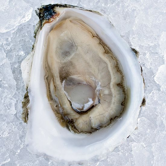eastern oyster drawing - photo #47