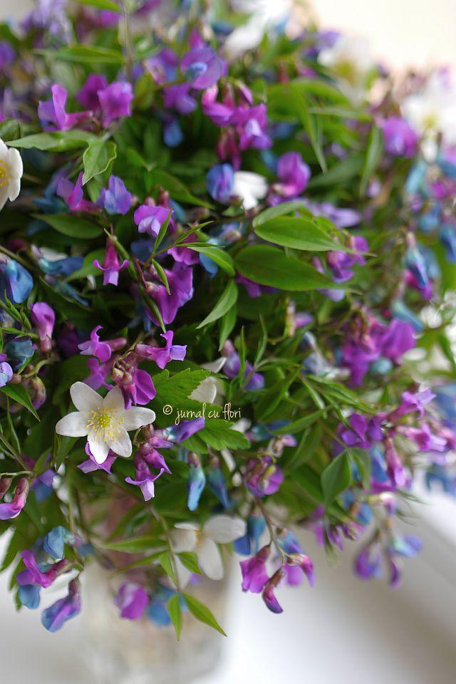 #buchetflorimov #paduretransilvania #florisalbatice  #transylvania #wild